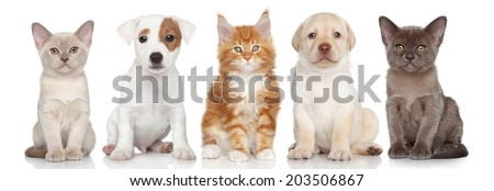 Group of small kitten and puppies are on white background