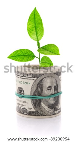 Growing money isolated on white