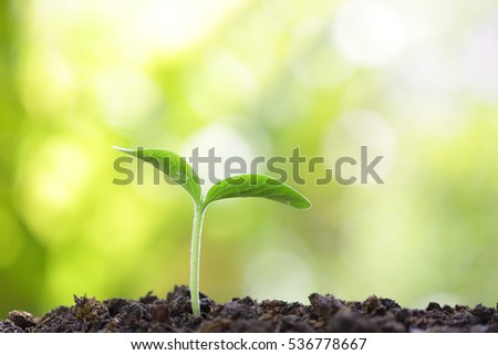 Growing sprout