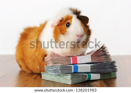 Guinea Pig with Money
