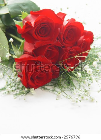 Half a dozen red roses with baby's breath on a white background ...