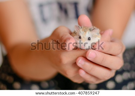 Hamster hold hands girl held stance that it will deliver to the people who want to feed the Hamster