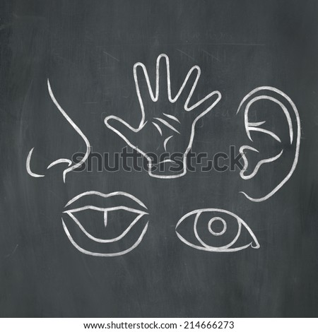 Hand-drawn illustration of the five senses in white chalk on a blackboard background.