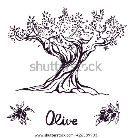 hand drawn ink olive tree