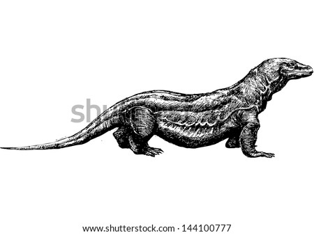 Monitor lizard coloring book adults vector stock vector for Komodo dragon tattoo