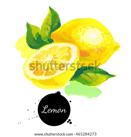 Hand drawn sketch acrylic watercolor painting on white background. Illustration of fruit lemon