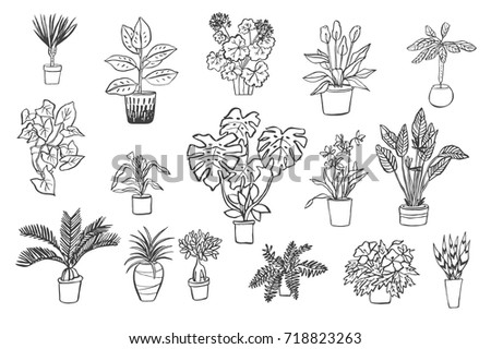 Home Plants Line Set Stock Vector 451815526 - Shutterstock