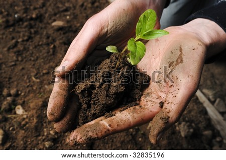 hand holding a seedling in soil