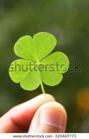 Hand holding three leaf clover