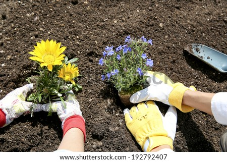Hand of the couple to plant seedlings of flowers in the garden,