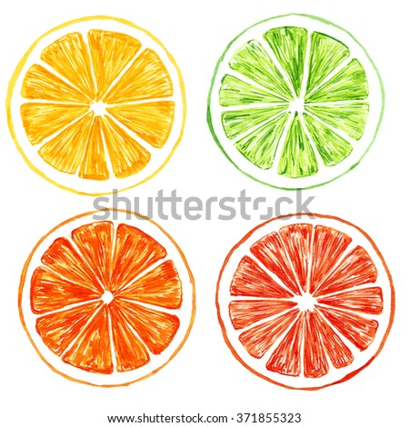 Hand painted citrus.Watercolor set. Orange, grapefruit, lime, lemon.
