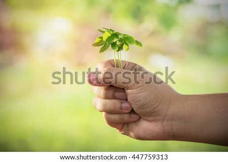 Hands clutching the small tree with blur background