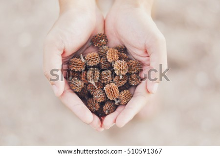 Hands Holding Dry Pine Cone In Heart Shape In Nature Vintage Filter Style