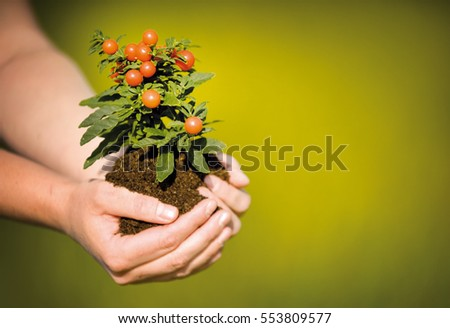 Hands holding growing plant, on green background