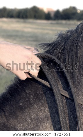 hands on horse close up
