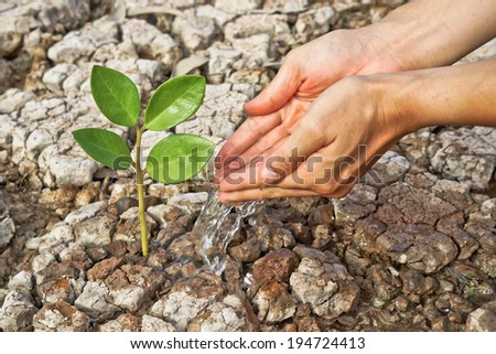hands watering a tree on cracked earth / love nature / love tree