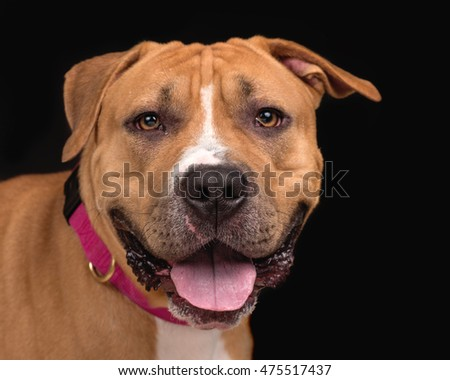 handsome mixed breed dog