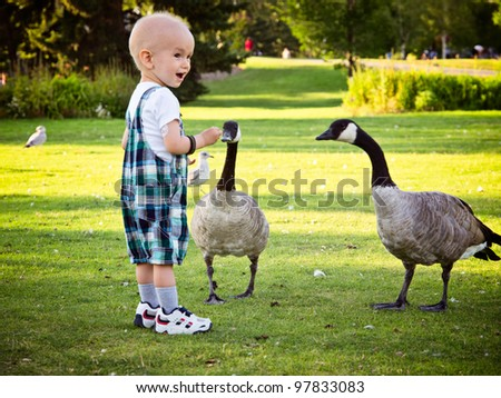 Happy and positive baby boy feeding geese in local park. Catheter on a right arm is visible and it's used for treating kids with cancer. Focus is on back bird, and boy might be soft viewed at 100%.