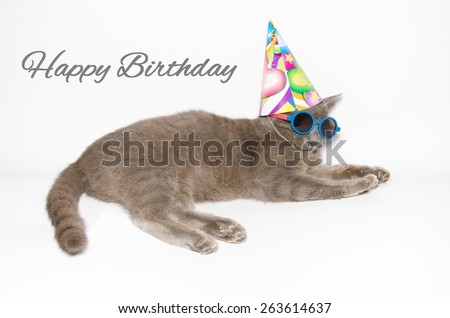 Happy birthday card with cat wearing sunglasses and party hat