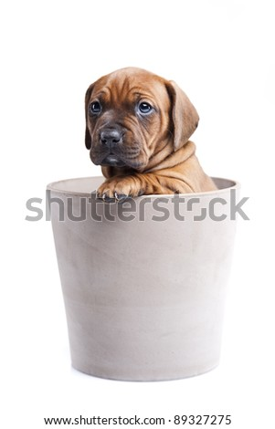 happy doggy in pot isolated on white background