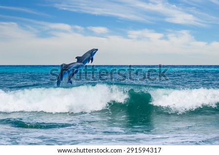 happy playful dolphins leaping from sea breaking surfing wave to foam