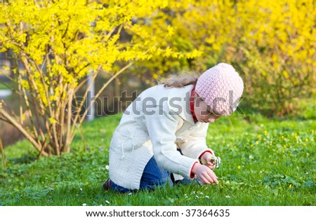 Happy small girl gather gowan flowers near blossoming yellow Forsythia bush