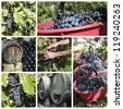 harvest collage - stock photo