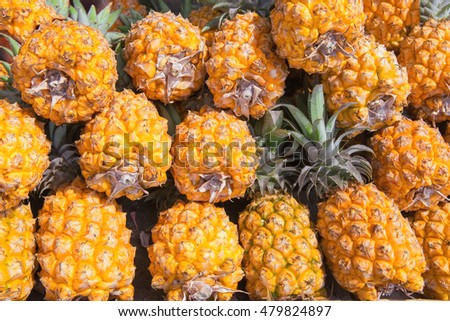 harvest fresh pineapples as food background