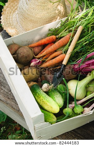 Harvest of fresh vegetables, hat and small trowel