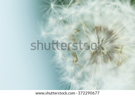 hats flying dandelion in the wind