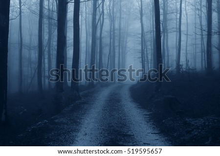 Haunted misty forest