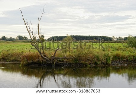 Havel river landscape with willow tree and meadows. Havelland (Brandenburg, Germany)