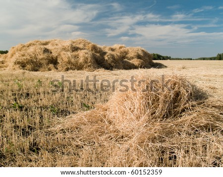 haystack harvested on the field for drying