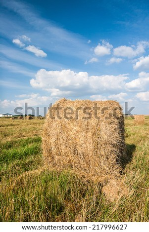 Haystacks in the field at sunny day