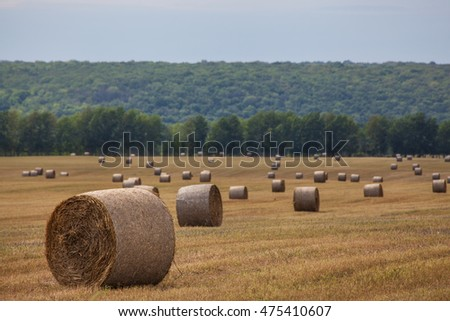 Haystacks on the field, forest background