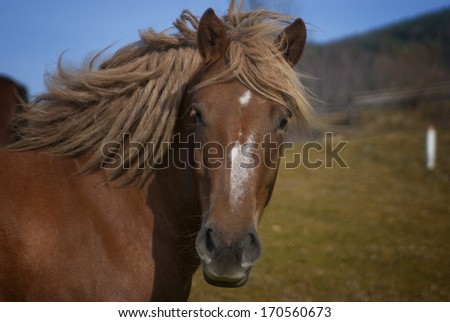 Head of a horse against a pasture