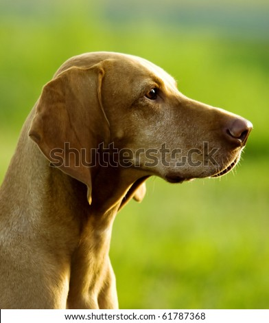 Gun-dog Stock Photos, Images, & Pictures | Shutterstock