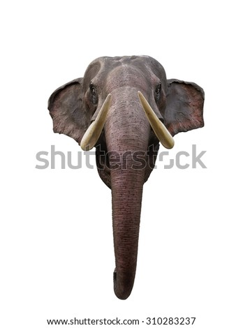 Head of Thailand Elephant