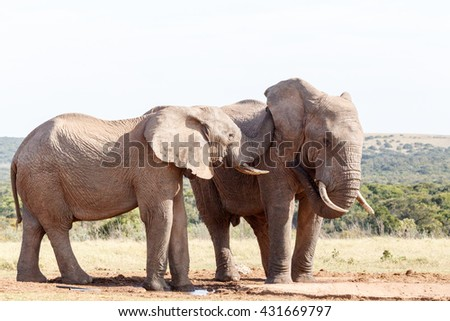 Hear ME - The African bush elephant is the larger of the two species of African elephant. Both it and the African forest elephant have in the past been classified as a single species.