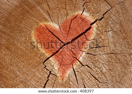 Heart sign on the tree