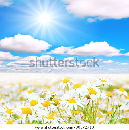 Heavenly daisies