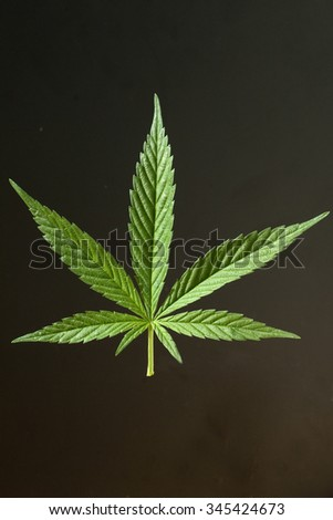 hemp; cannabis; indica; sativa