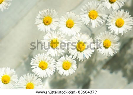 herbal chamomile flowers in aroma bowl
