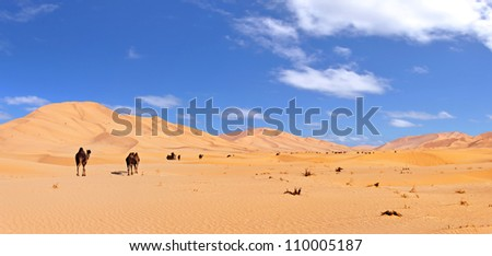 Herd of Camels in the Arab Desert