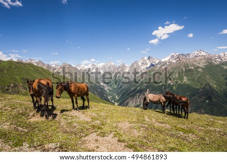 Herd of horses feasting high in the mountains