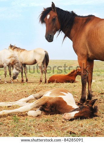 Herd of horses have a rest in the field