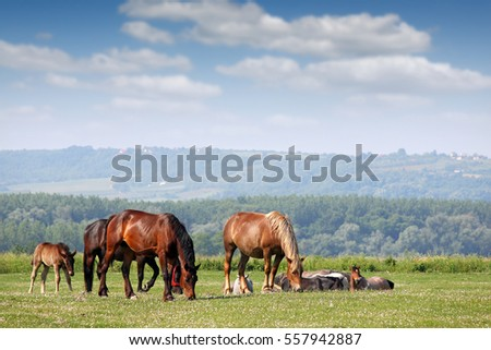 herd of horses on pasture spring season