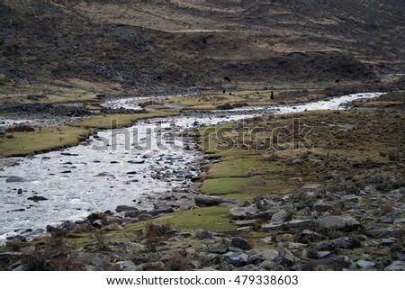 herd of yaks in tibetan river