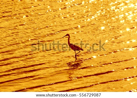 Heron on the sea
