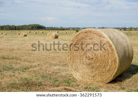 hey rolls in the field